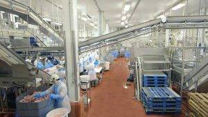 Analysis of Canada Meat Processing Market