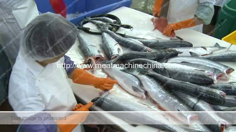 Fish-Processing-Industry-Introduction