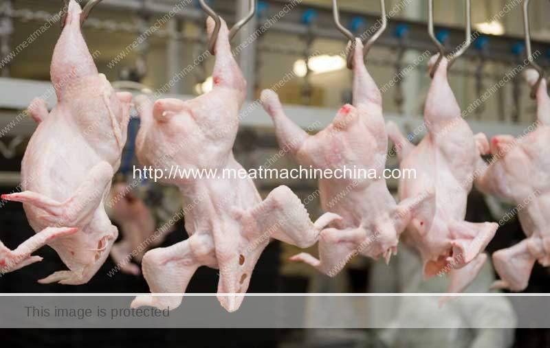 How-to-Process-Chicken-in-Chicken-Processing-Factory