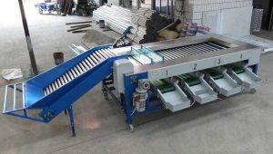 Full Automatic Lobster Shrimp Size Sorting Grading Machine Manufacture